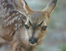 """""""Spotted - Mule Deer Fawn"""" Carl Brenders Limited Edition Fine Art Giclee Canvas"""
