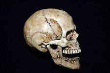 1/6 Scale Human Skull mobeable jaw