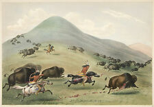George Catlin's Indian Gallery: Indians Hunting Buffalo - Fine Art Print