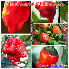 25 Seeds Mixed Ornamental Chilli Pepper Seeds Sweet Hot Chili Mixed Seed Pack #1