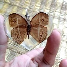 Butterflie Real Pendant In Clear Resin Key ring Accessories Insect KeyChain Moth
