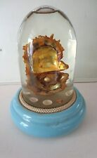 RARE ODDITY Antique curiosity real Oyster with Pearl in a Glass Dome