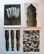 KARL BLOSSFELDT x4 POSTCARD Set/ Lot Magnified works plants photography Nature