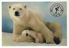 Polar Bear Mother & Cub, Baby, Svalbard, Norway, Arctic Circle - Animal Postcard