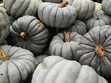 5 graines de CITROUILLE BLEUE AUSTRALIENNE - Jarrahdale Pumpkin Heirloom Seeds