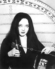 THE ADDAMS FAMILY CAROLYN JONES 11X14 PHOTO IN CHAIR