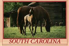 Horses in South Carolina, The Palmetto State, Mare, Foal Horse - Animal Postcard