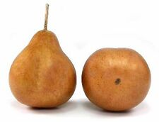 Artificial Demi Pear, Box of 12, Russett (brown) Fake Pears Bosc