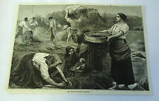 1882 magazine engraving ~ The Colza Harvest In Italy ~ Workers In Field