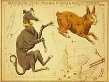 PAINTINGS DRAWING STAR MAP CANIS MAJOR HARE DOG CONSTELLATION POSTER LV3129