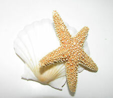 Sea Shell Sugar Starfish Hair Clip Fascinator Mermaid Beach Bridal Orange A81