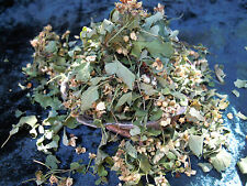 Hawthorn flowers & leaves Wicca/Pagan/Spell Supplies/Herbs/Incense witchcraft