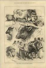 1879 Prizewinners At The Cattle Show At Islington