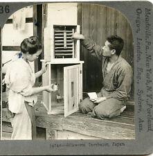 SILKWORM INCUBATOR JAPAN STEREOVIEW