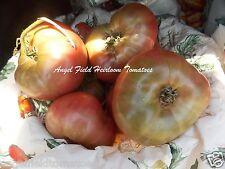 Indian Stripe Heirloom Tomato Seeds from Arizona 30 Angel Seeds Plus Free Gift.
