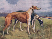 GREYHOUND CHARMING DOG GREETINGS NOTE CARD,TWO BEAUTIFUL STANDING DOGS