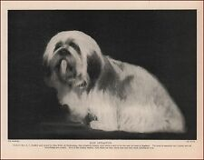 LHASSA APSO Dog Best in England, vintge print, authentic 1935