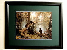 BLACK BEAR PICTURE BEAR FAMILY IN PINE FOREST MATTED FRAMED 16X20