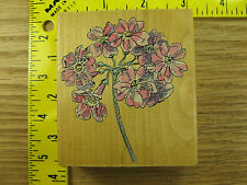 Rubber Stamp Auriculas Penny Black Hydrangea Flower Botanical Stampinsisters #81