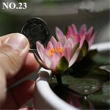 Little Pink Bowel  Lotus nice petal colorful  water plant   10 seeds NO.23