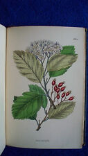 1899 Sowerby ENGLISH BOTANY H/C Hand Colored Plates Volume 13 SUPPLEMENT