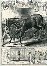 HORSES HARNESS DRIVING EQUINE ANIMALS ANTIQUE PRINT by WEIR