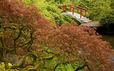 Framed Print - Japanese Garden with Red Bridge (Trees Water Bush Scenic Picture)