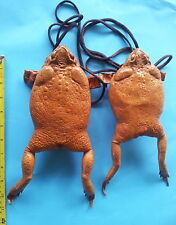 2 Giant Philippine tanned leather skin cane toad frog lucky Rhinella marina pest