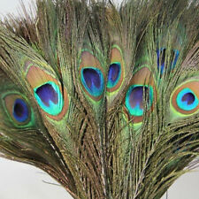 Pack o30pc Natural Peacock Feathers 10-12''