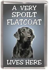 "Flatcoated Retriever Fridge Magnet ""A VERY SPOILT ..... LIVES HERE"" by Starprint"