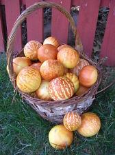 Tigger Melon *Heirloom* Non-GMO *RARE* (25 Seed's)