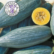 Rare Squash Guatemalan Blue Banana, Vegetable - 5 seeds - UK SELLER