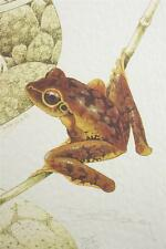 David Stacey Limited Edition Print Brown Tree Frog D.H. Stacey