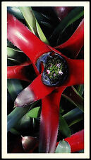 Bromeliad #2 Disappearing Rain Forest Card (C279)