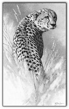 Cheetah print picture wildlife wall art animal A3 b/w poster cat pencil drawing