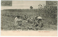 Chinese Harvesters Having Rest, Russian issue from Charbin, 1910s