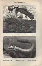 Lithografie 1896: Schwanzlurche I/II URODELEN Kammmolch Feuersalamander Axolotl
