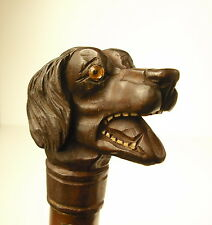 Canne ancienne pommeau tête de chien bamboo cane with carved wood dog pommel