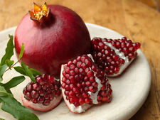 15 graines de GRENADIER (Punica Granatum PROVENCE )H413 POMEGRANATE SEEDS SAMEN