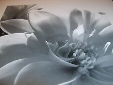 THREE Black and White Fine Art Flower Prints - Ideal for Christmas.