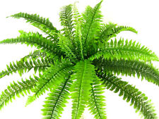 Artificial Large Silk Boston Fern Bush Plant ~ Flat-pack Home & Conservatory