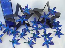 20 Blue Galaxy Star Dendrobium Orchid Heads