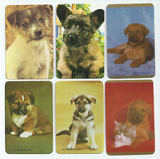 #600.031 Blank Back Swap Cards -MINT- Lot of 6 - Photos of small dogs
