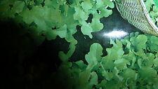 Graines semences Laitue  feuille de Chêne  à couper seed