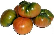 FRENCH Heritage heirloom RAF LARGE GREEN RED RIB tomato 20 Professional seeds