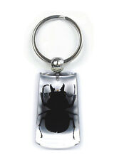 Clear Lucite Lucky Charm Keychain w/ GENUINE Blackish Stag Beetle SK1042