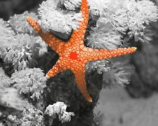 Gray Orange Home Decor Starfish Wall Art Nautical Photo Print Picture Matted