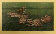 """Anthony GIBBS """"un Bachelor's life"""" lions fierté le signé taille:57 cm x 90cm NEUF"""