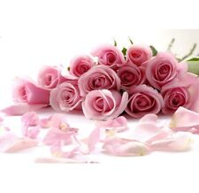FD702 10 Seeds China Rare Pink Rose Seed For Lover Pink Rose Seed Fresh ~10pcs ^