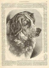Dog, Newfoundland, Gorgeous Image, Vintage 1873 French Antique Art Print